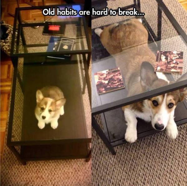 Old Habits Are Hard To Break - Dog humor
