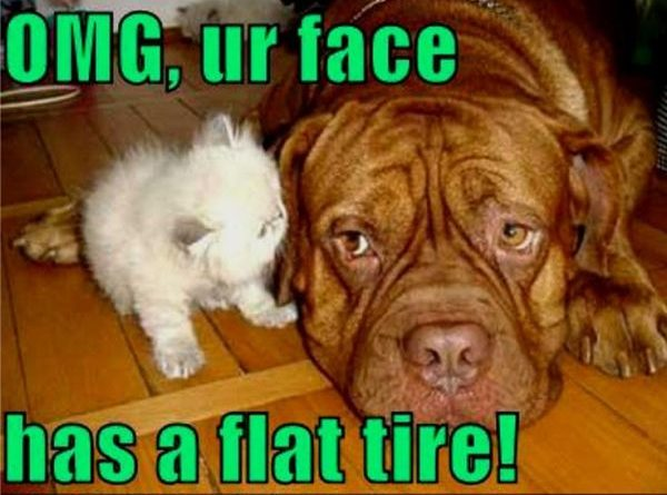 OMG! What Happened To Your Face? - Dog humor