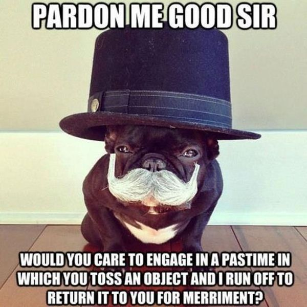 Pardon Me Good Sir - Dog humor