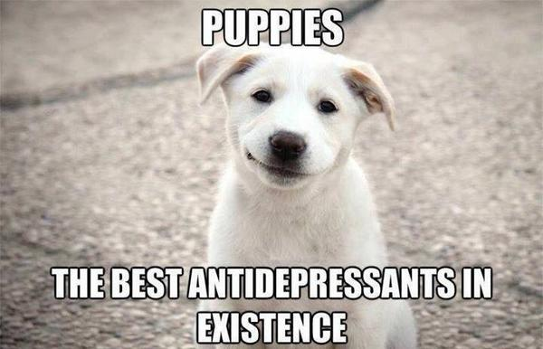 Puppies - Dog humor