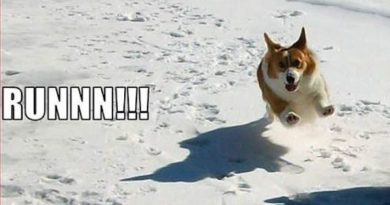 Run For Your Life - Dog humor