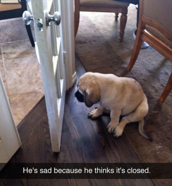 Sad Puppy - Dog humor