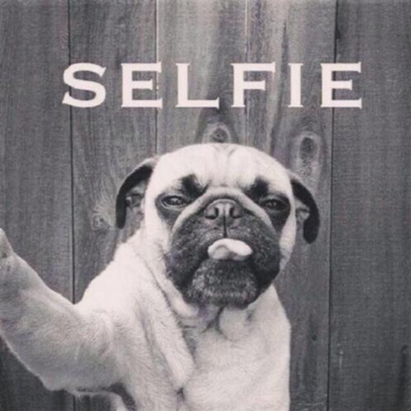 Selfie - Dog humor