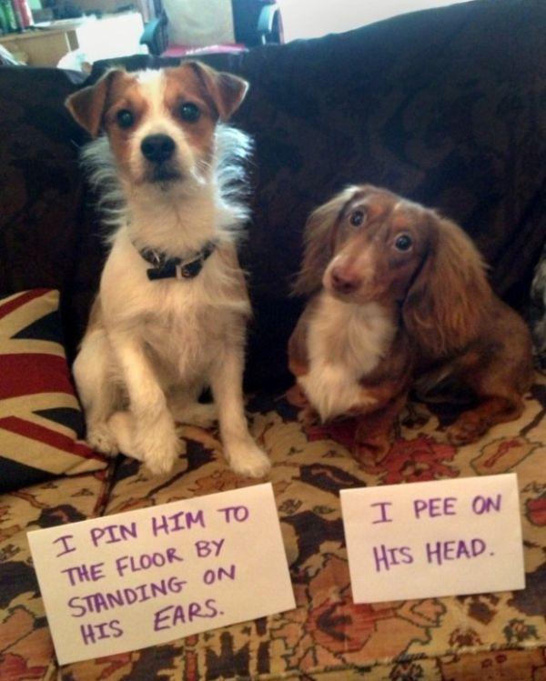 Shame On You Guys - Dog humor