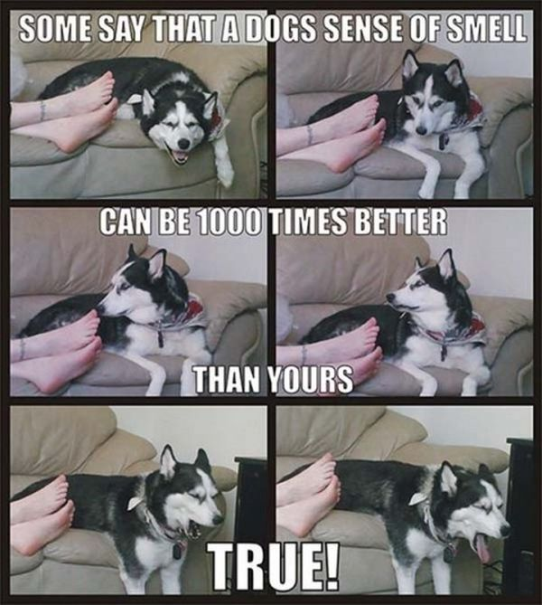 Some Say... - Dog humor