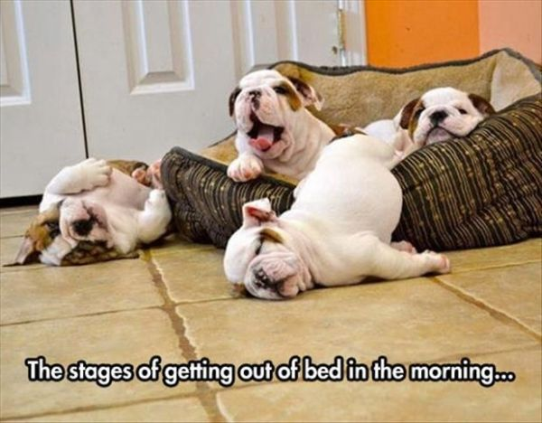 The Stages Of Getting Out Of Bed In The Morning - Dog humor