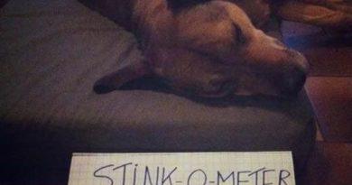 Stink-O-Meter - Dog humor