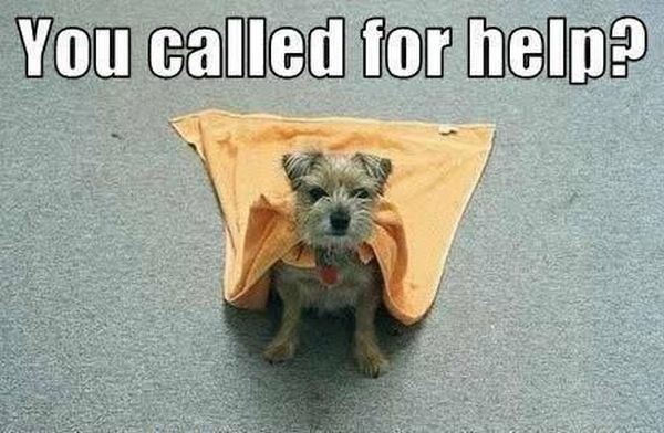 Superdog - Dog humor
