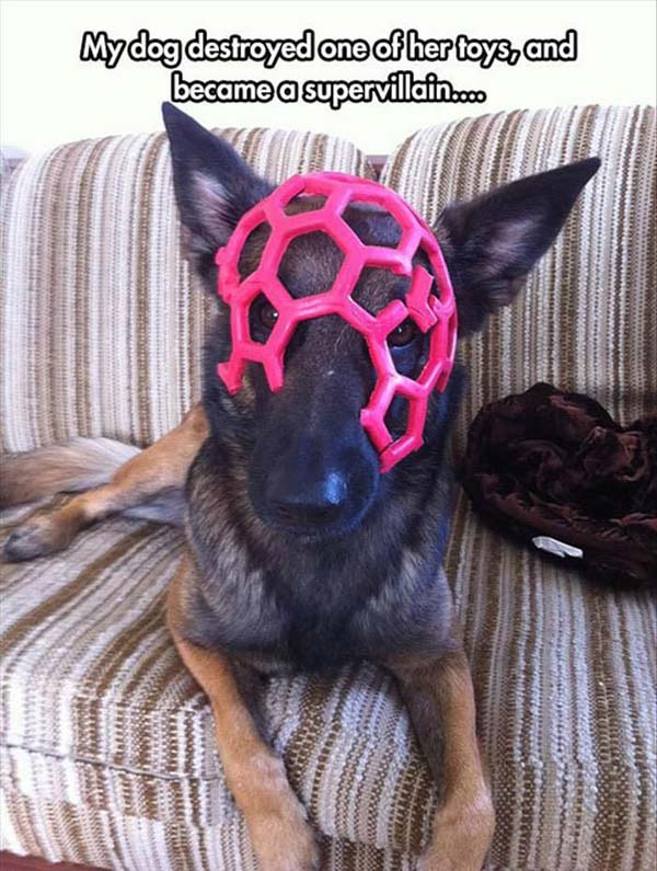 Supervillain - Dog humor