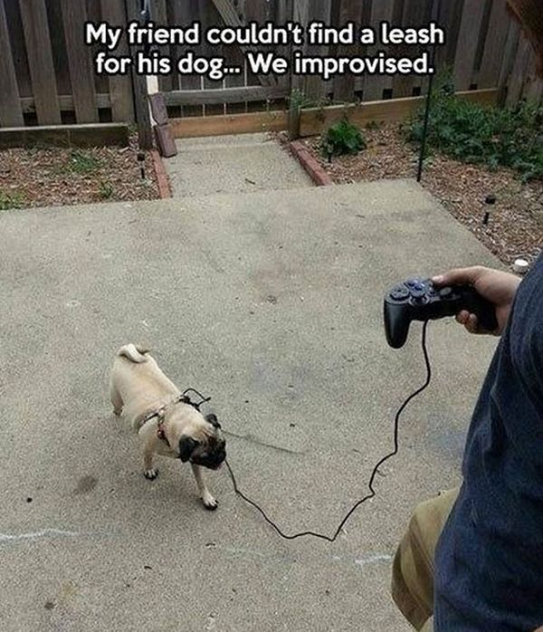 They Improvised... - Dog humor
