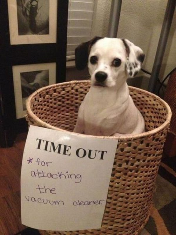 Time Out - Dog humor