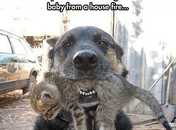 Who Said They Are Enemies? - Dog humor