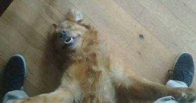 You're Home! - Dog humor