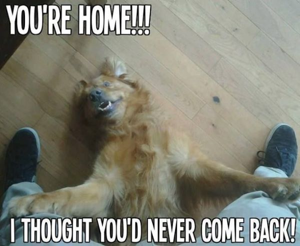 You're Home! - Dog humor