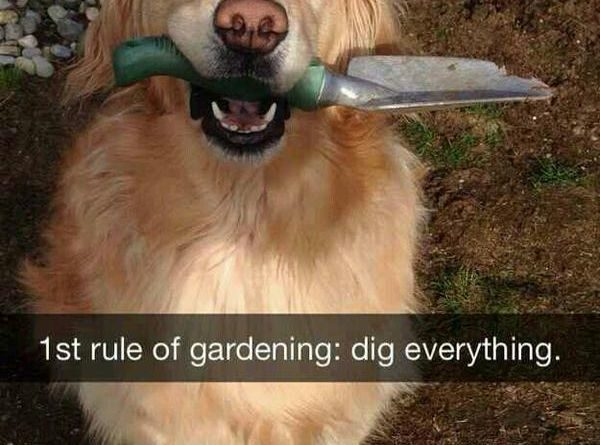 1st Rule Of Gardening - Dog humor
