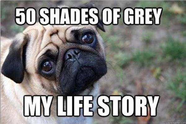 50 Shades Of Grey - DOg humor