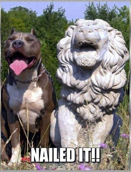 Nailed It - Dog humor