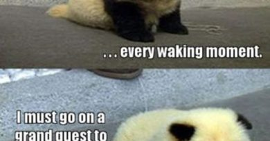 Am I Panda? Or Am I Dog? - Dog humor