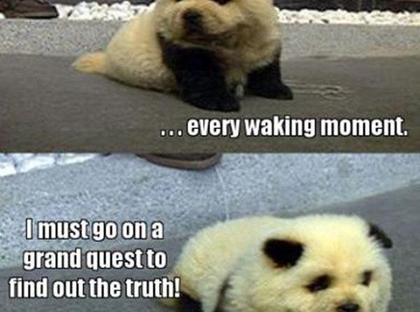 Am I Panda? Or Am I Dog? - Dog humor