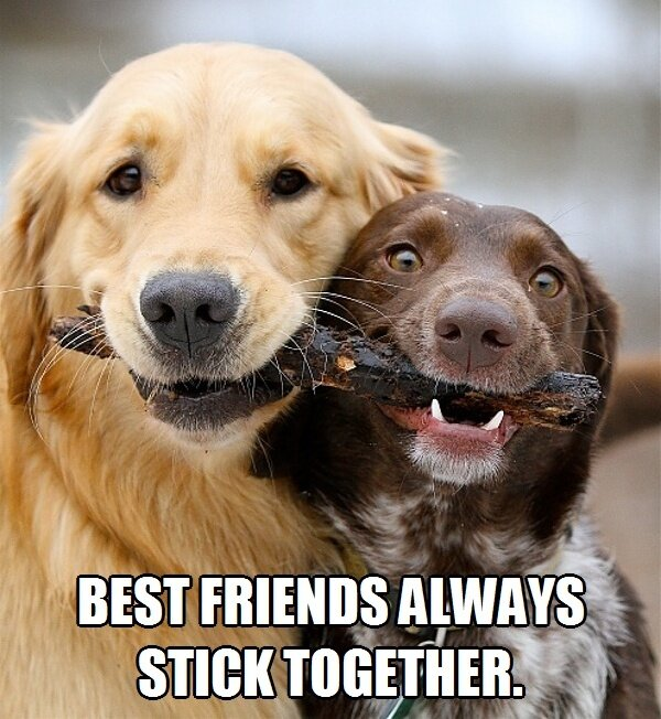 Best Friends Always Stick Together - Dog humor