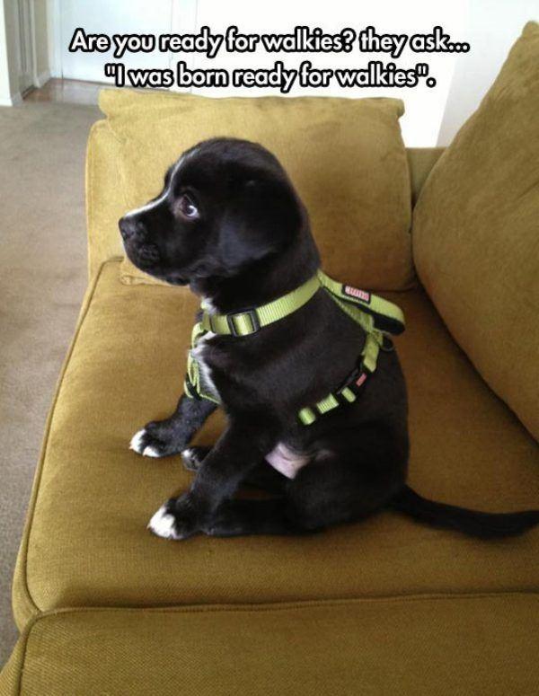 I Was Born Ready - Dog humor