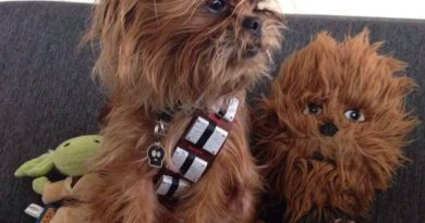 Chewbacca Pup - Dog humor
