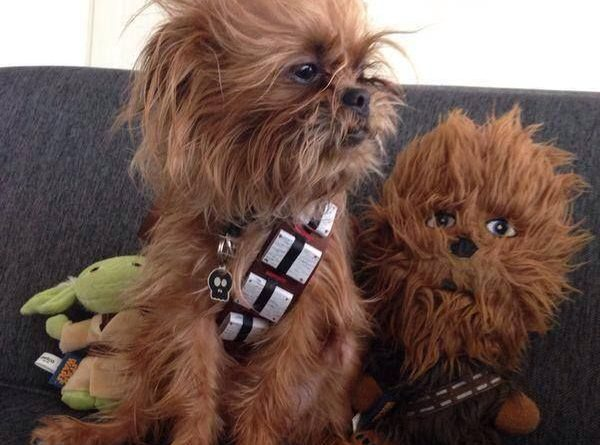 Chewbacca Pup - Dog humor