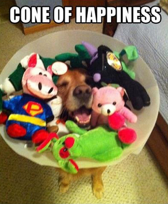 Cone Of Happiness - Dog humor