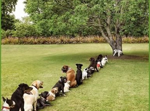 Another Problem Caused By Deforestation - Dog humor