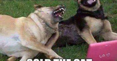 Discovered Ebay - Dog humor