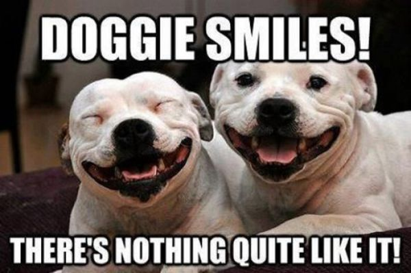 Doggie Smiles - Dog humor
