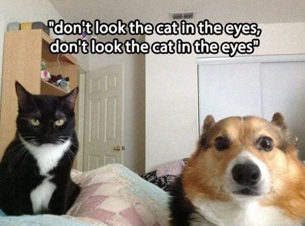 Don't Look The Cat In The Eyes... - Dog humor