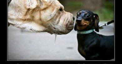 Don't Make Eye Contact - Dog humor