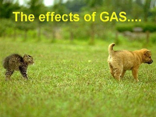 The Effects Of Gas - Dog humor