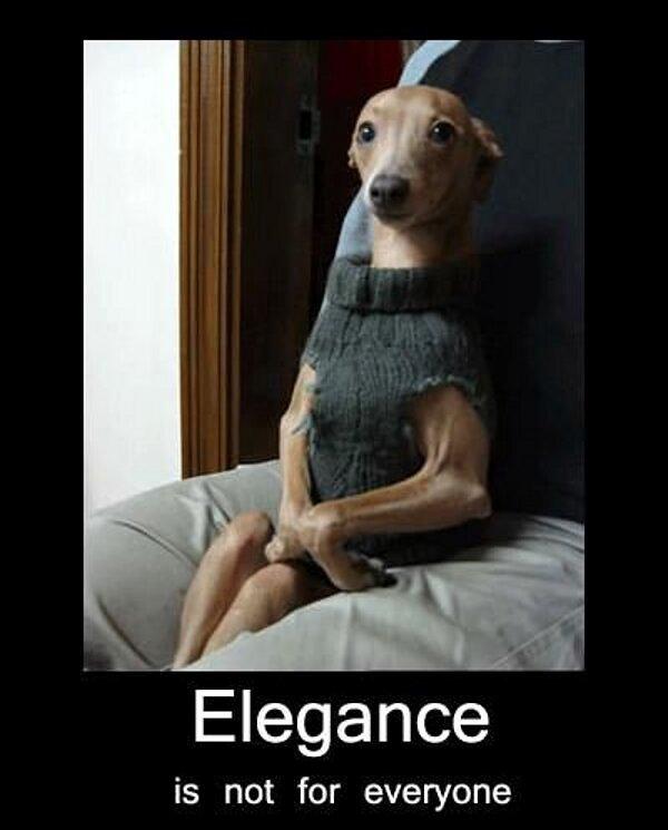 Elegance... - Dog humor