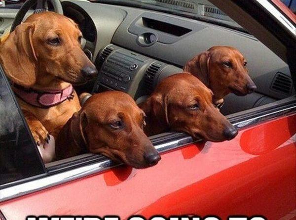 Get In Looser - Dog humor
