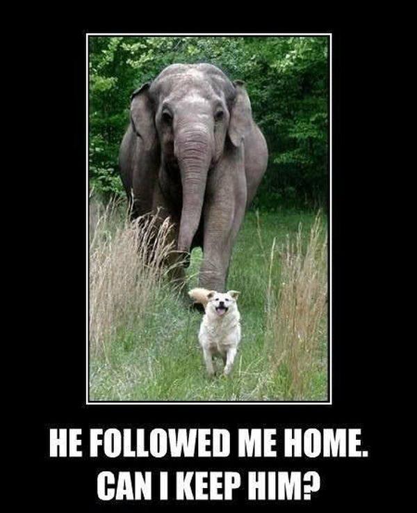 He Followed Me Home - Dog humor