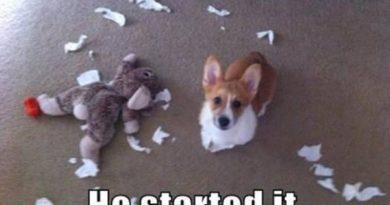 He Started It - Dog humor