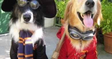Hogwarts Students - Dog humor