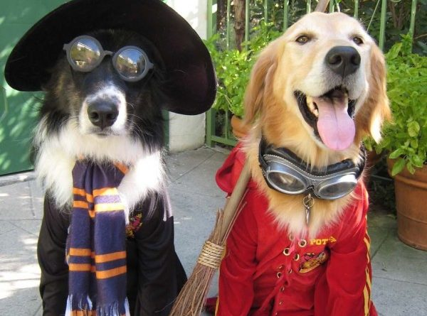 Hogwarts Students - Dog humor