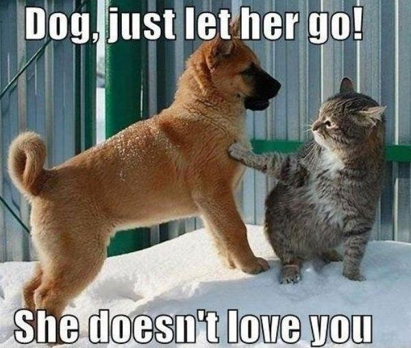 Dude Just Let Her Go - Dog humor