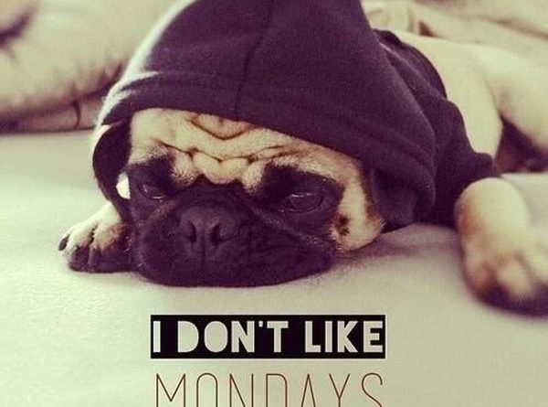 I Don't Like Mondays - Dog humor