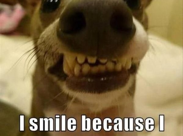I Smile Because... - Dog humor