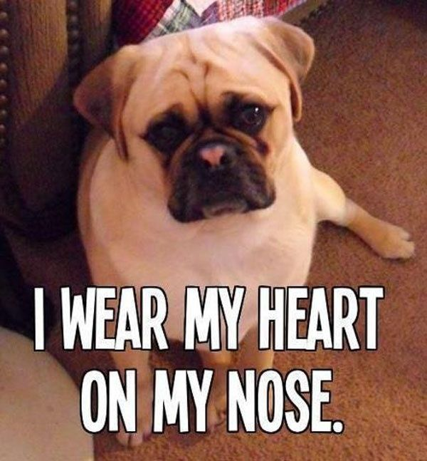 I Wear My Heart On My Nose - Dog humor