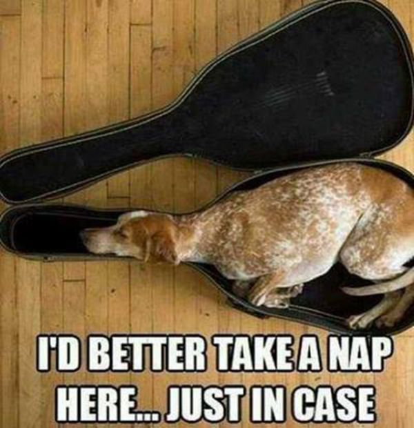 I'd Better Take A Nap Here - Dog humor