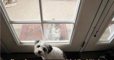 If You Love Me - Dog humor