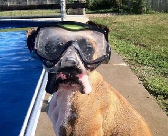 I'll Find That Ball - Dog humor