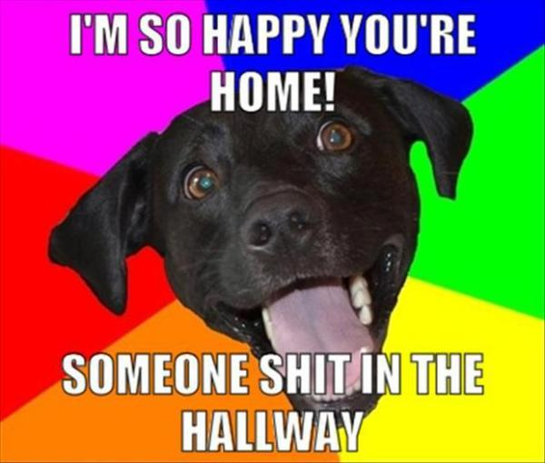 I'm So Happy You're Home - Dog humor
