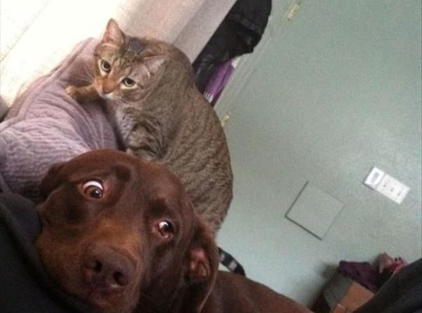 It's Behind Me, Isn't It? - Dog humor