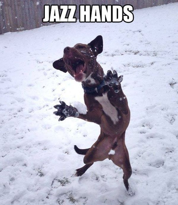 Jazz Hands - Dog humor